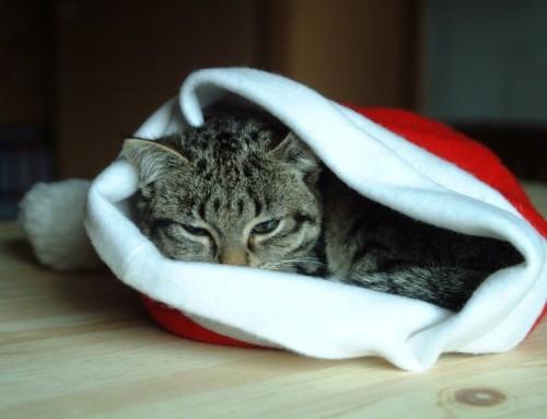 Tierische Weihnachten – Fotos gesucht!