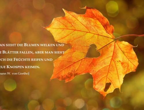 Schöne Herbstferien!!